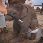 Un circo senza animali è più umano