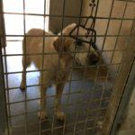 Canili comunali di Roma, taglio sul benessere degli animali