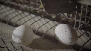 Il vero prezzo delle uova