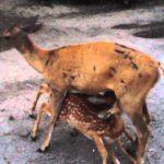 """Caccia, """"Governo e Regioni al servizio delle doppiette, dichiarano guerra alla fauna selvatica"""""""