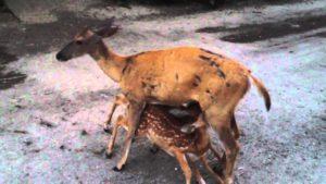 Incendi, strage di animali