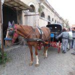 """Roma, Gay Village 2018 a Testaccio: """"Una tortura per i cavalli delle botticelle""""."""