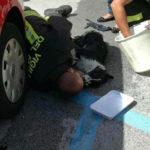 Cuneo, Tre cani dimenticati in auto sotto il sole cocente, uno è deceduto