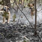 """Campania, eutanasia per i cani in """"zona rossa"""": """"È illegale"""""""
