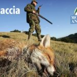 #Stopcaccia, petizione del movimento animalista su change.org