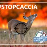 Siccità e incendi, il Movimento animalista lancia sul web la campagna #stopcaccia