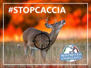 #stopcaccia