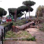 Roma, è strage di alberi, Raggi viola direttiva europea conservazione uccelli
